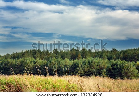Summer Landscape with Young Pine Trees - stock photo