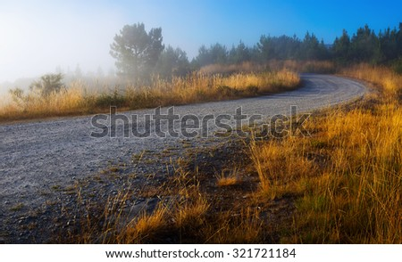 Summer lanscape with road and pine forest in misty morning - stock photo