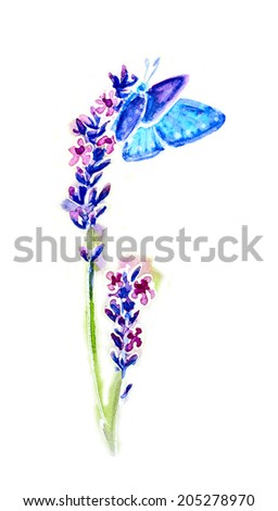 Summer lavender flowers and butterflies isolated on white, watercolor