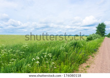 Summer Lawn Vibrant Colors  - stock photo