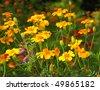 Summer meadow - stock photo