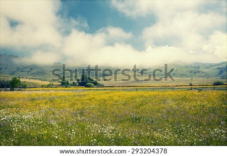 Summer meadow and deep blue sky - stock photo