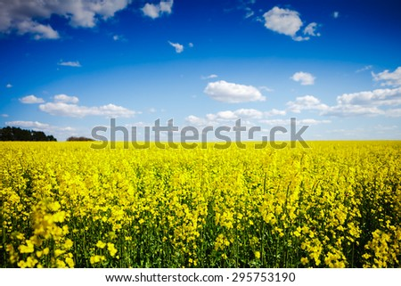 Summer meadow landscape - stock photo