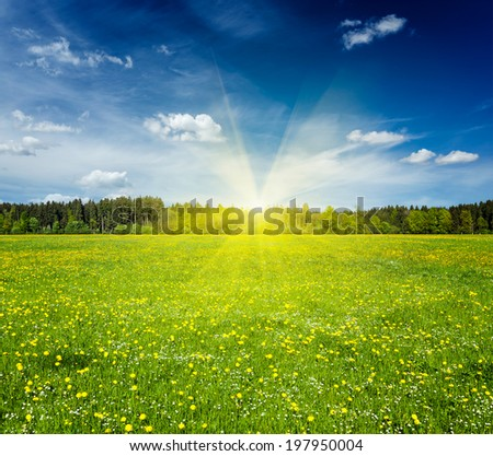 Summer meadow on sunset with blu sky and sun rays