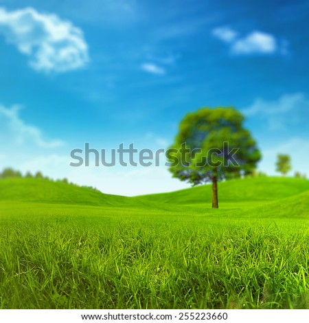 Summer meadow under bright noon sun - stock photo