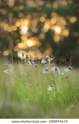 Summer meadow with butterflies - stock photo