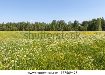 Summer meadow with flowers in bloom - stock photo