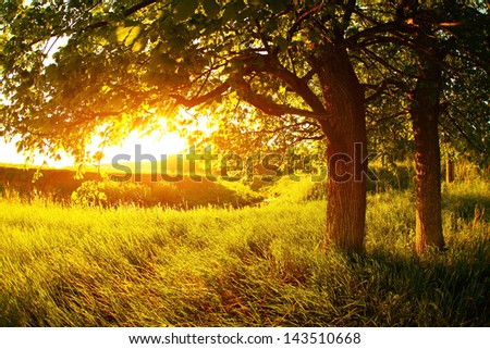 Summer meadow with lush grass and trees - stock photo