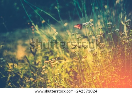 Summer Meadow with Monarch Butterfly Resting on Wildflower. Wild Meadow Nature Background - stock photo
