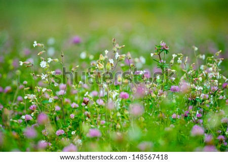 Summer meadow with various herbs, shallow depth of field - stock photo