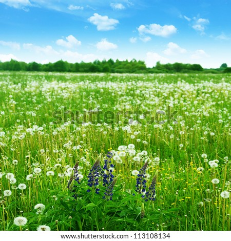 Summer meadow with wildflowers under blue sky. - stock photo