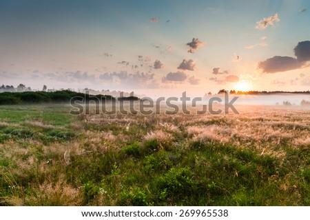 Summer misty dawn on the meadow - stock photo