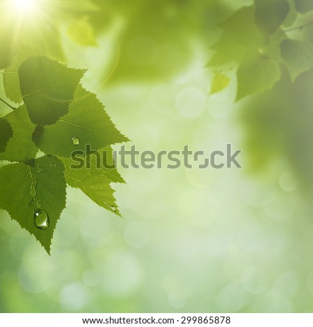 Summer Morning. Abstract natural backgrounds. Green leaves with dew water drops - stock photo
