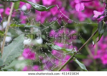 summer morning and the dew drops on the leaves and cobwebs - stock photo