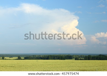 Summer morning in wheat field. - stock photo
