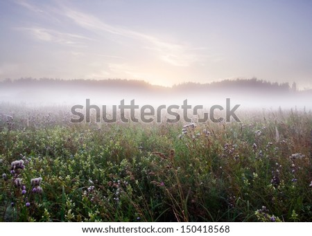 summer morning wild meadow - stock photo