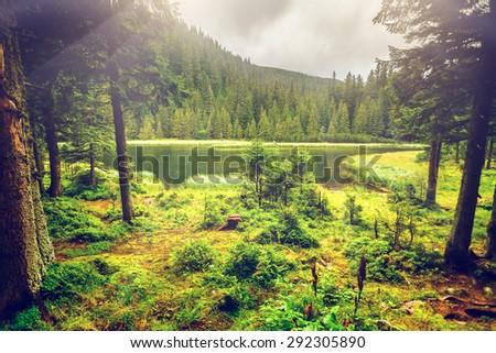 Summer mountain lake Marichejka and fir forest reflection (Ukraine, Chornogora Ridge, Carpathian Mountains) - stock photo
