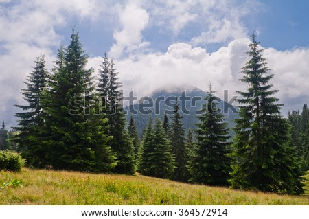 Summer mountain landscape with fir and mountain covered with clouds. Ukraine. Mount Chomiak. Carpathians. - stock photo