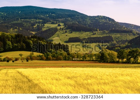 Summer mountain valley with crops growing in fields. Germany, Black Forest. Scenic agricultural landscape. - stock photo