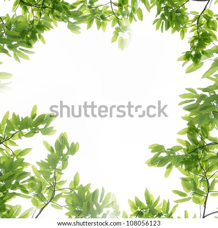 summer nature green leaf isolated