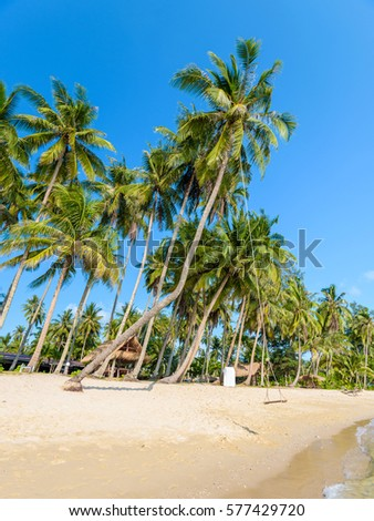 Summer nature scene. Tropical beach with sea, blue sky and palm trees