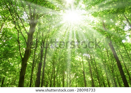 summer nature. sunlight in trees of green forest - stock photo