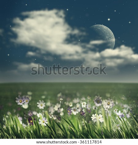 Summer night. Abstract natural backgrounds with beauty flowers - stock photo