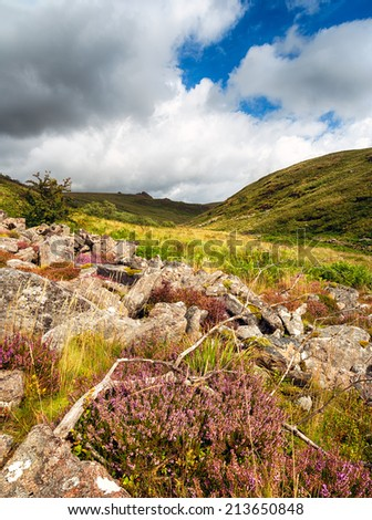 Summer on Dartmoor National Park in Devon taken at Tavy Cleave near Mary Tavy - stock photo