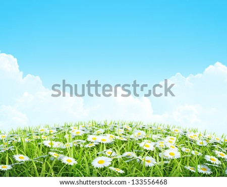 Summer or Spring Background with grass and flowers. Shiny meadow with chamomiles. - stock photo