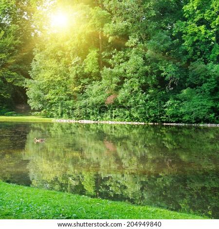 Summer park, a beautiful river, sunrise - stock photo