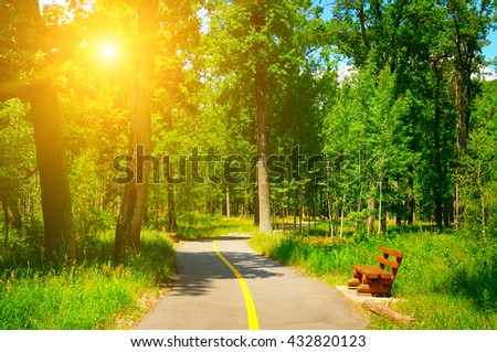 summer park with beautiful walking paths