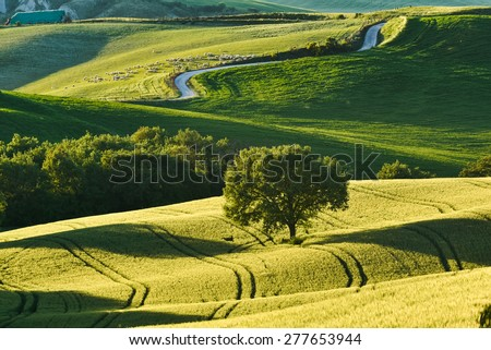 Summer pastoral green field with long shadows in Tuscany, Italy - stock photo