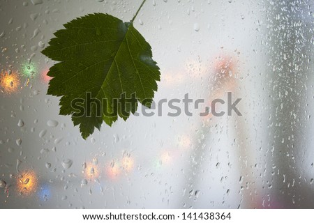 Summer. Rain.Leaf. - stock photo