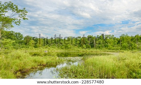 Summer Reflection, Blue Trail, Bald Mountain State Recreation Area, Lake Orion, Michigan - stock photo
