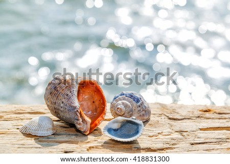 Summer rest concept, sea shells on the aged wood