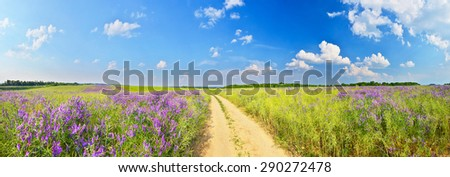 Summer road among flower fields - stock photo