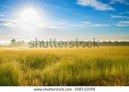 summer rural landscape with a field, sunrise and fog - stock photo