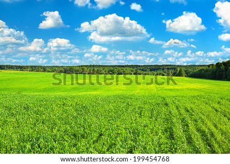 summer rural landscape with the blue sky, clouds and field,agriculture - stock photo