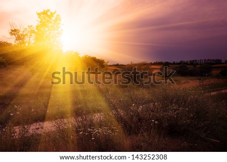 Summer scene - stock photo