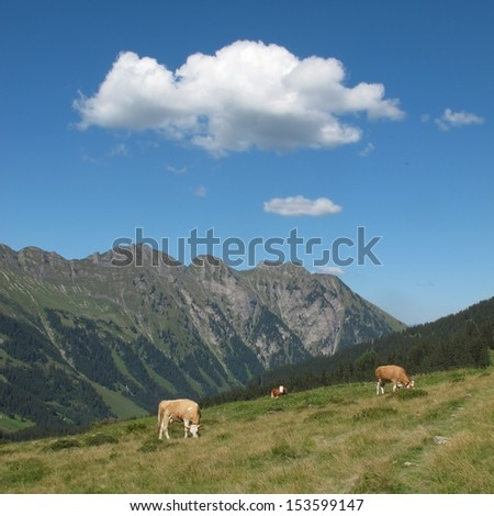 Summer scene in the Bernese Oberland, grazing cows and mountain