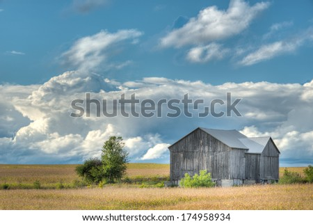 summer scene of a barn in a field with blue sky and clouds with ripened field of grain in the foreground  - stock photo