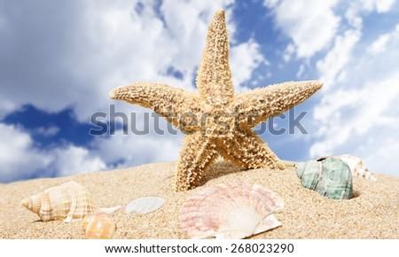 Summer. Sea star and colorful shells on coastline - stock photo