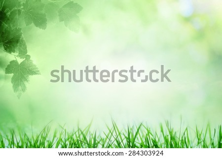 Summer sky with sunny background with growing grass