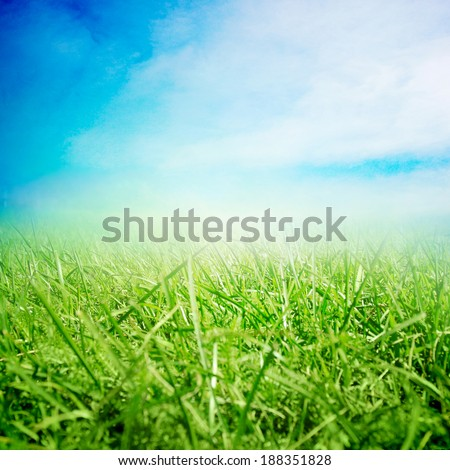 Summer sky with sunny field with growing grass - stock photo