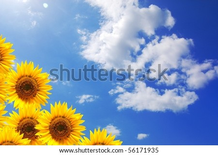 summer sun and copyspace on blue sky with flower