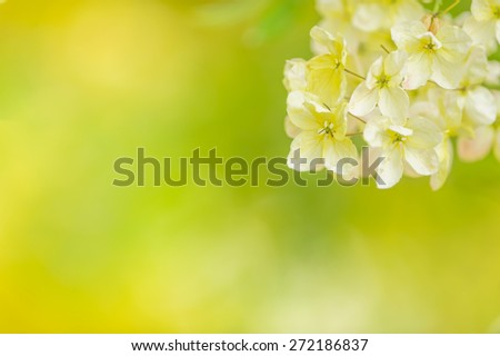 summer sunlight with beautiful yellow flowers and defocused abstract nature background with green leaves and bokeh lights.