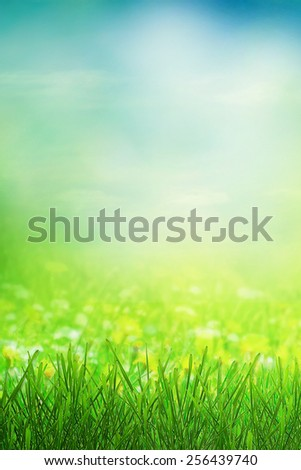Summer sunny background - stock photo