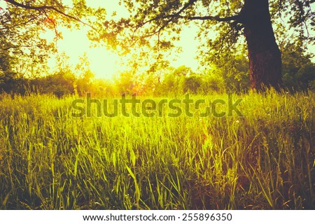 Summer Sunny Forest Trees And Green Grass. Nature Woods Sunlight Background. Instant Toned Image - stock photo