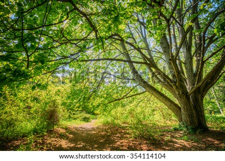 Summer Sunny Forest Trees, Lane, Path, Pathway. Nature Wood Sunlight