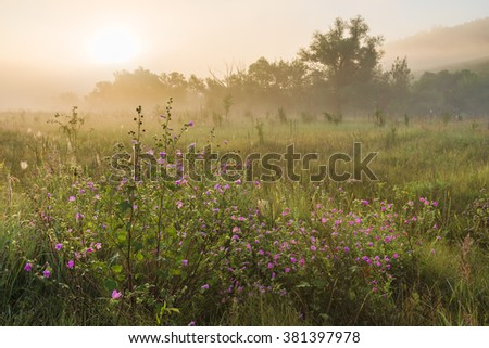 Summer sunny landscape misty morning with power field flowers - stock photo